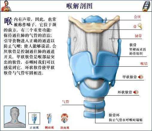 环甲膜穿刺部位图解