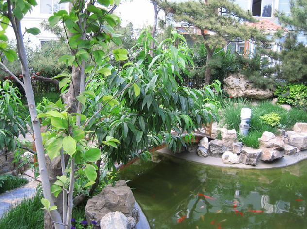 园林小品之假山水池3